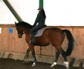 Kurz trenér, cvičitel jezdectví - Jezdecká akademie Mariánské Lázně