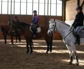 Kurz instruktor jezdectví - Akreditované středisko - Jezdecká akademie Mariánské Lázně