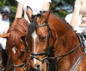 Kurz rozhodčí v jezdectví - Jezdecká akademie Mariánské Lázně