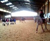 Kurz cvičitel jezdectví - závěrečné zkoušky - Jezdecká akademie Mariánské Lázně